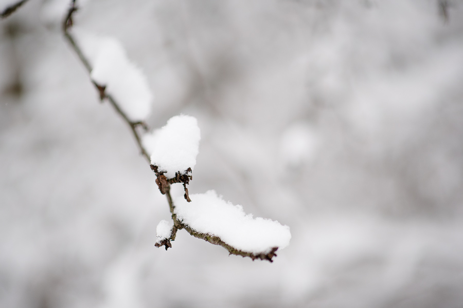snow, winter, branch